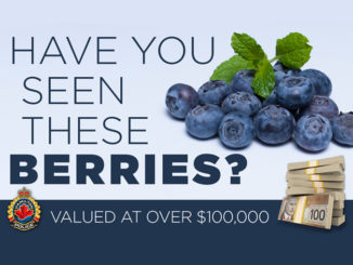 Thief In Hamilton Makes Off With $100K In Blueberries