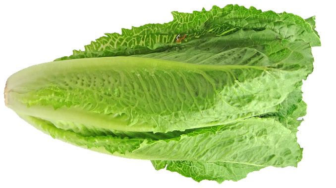 Hold the Romaine Lettuce