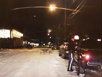 RCMP Dashcam Captures Cougar Jaywalking In Banff